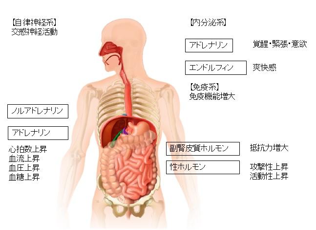 自律神経によるホルモンの分泌のコントロール